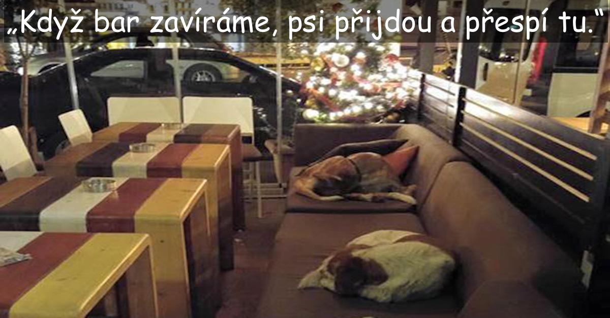 Tahle kavárna dává pouličním psům nocleh, a to každý den, když zákazníci odejdou