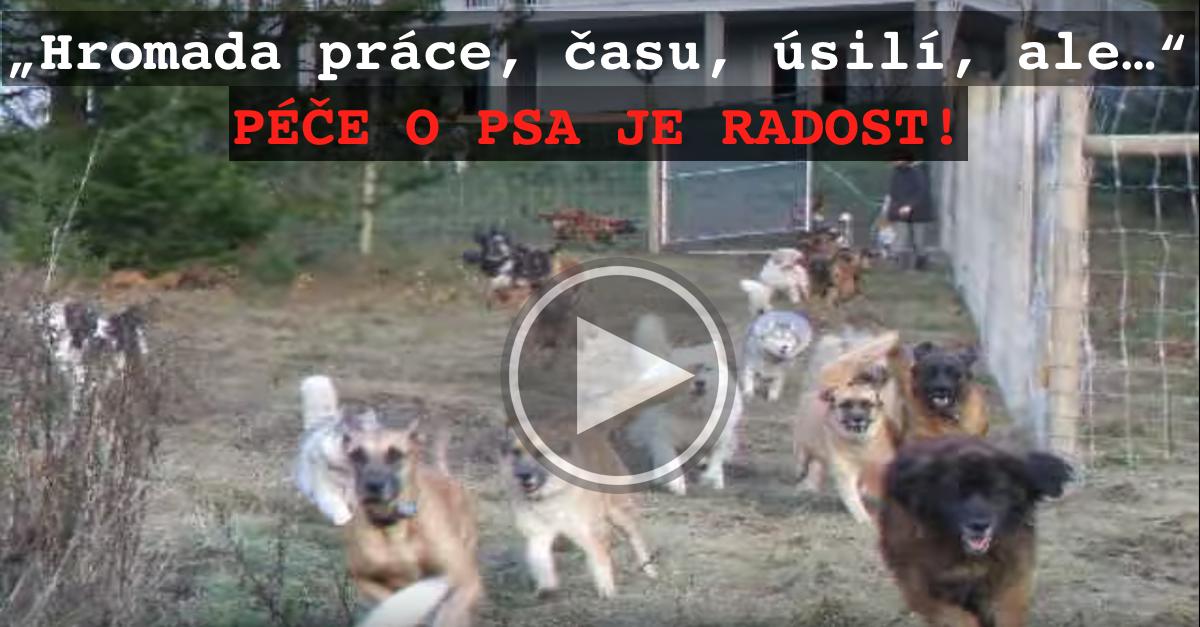 Když adoptoval 45 psů z útulku, řekl si, že si zaslouží něco víc…