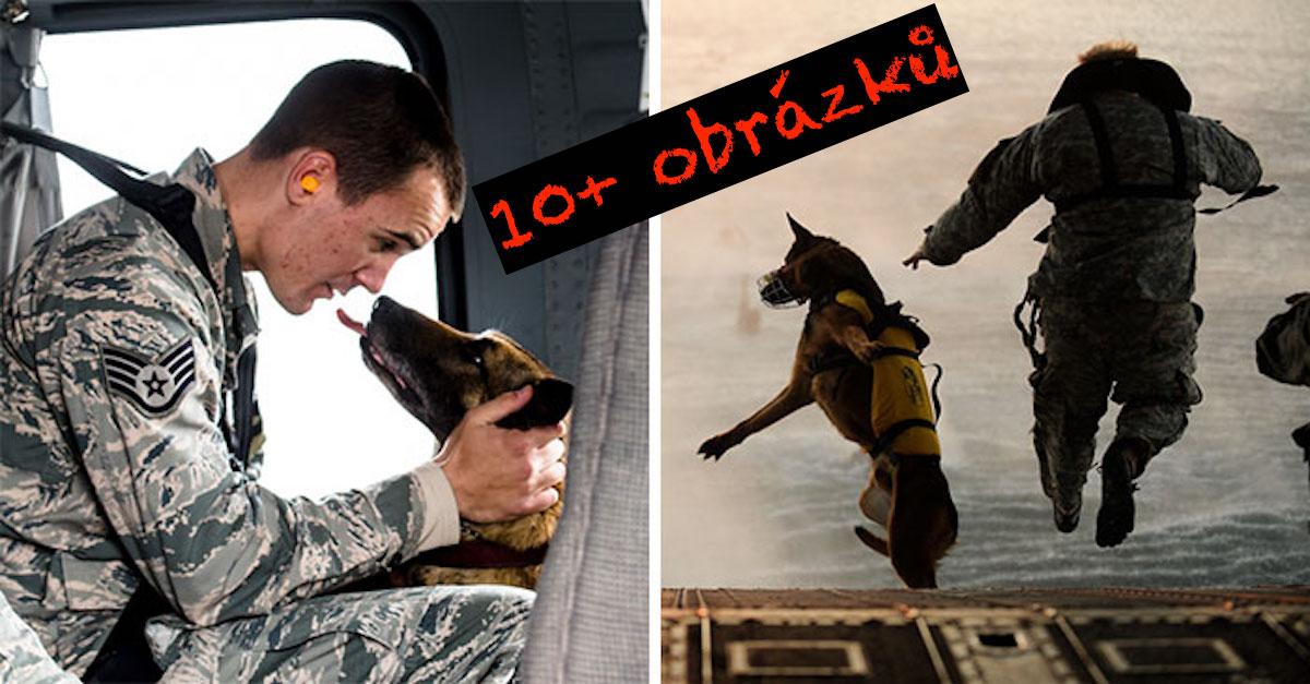 10+ emotivních obrázků služebních psů
