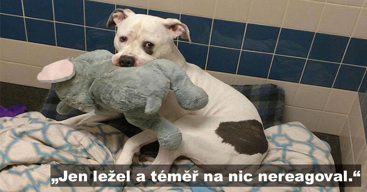Smutný pes z útulku měl jediného kamaráda, plyšového slona. A jak si zvykli na nový domov?