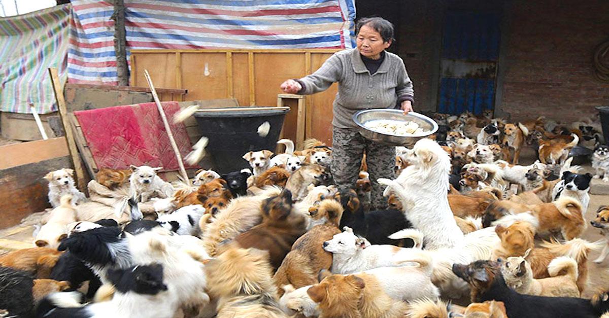 Každý den vstávají ve 4 hodiny ráno, aby nakrmily svých 1300 psů