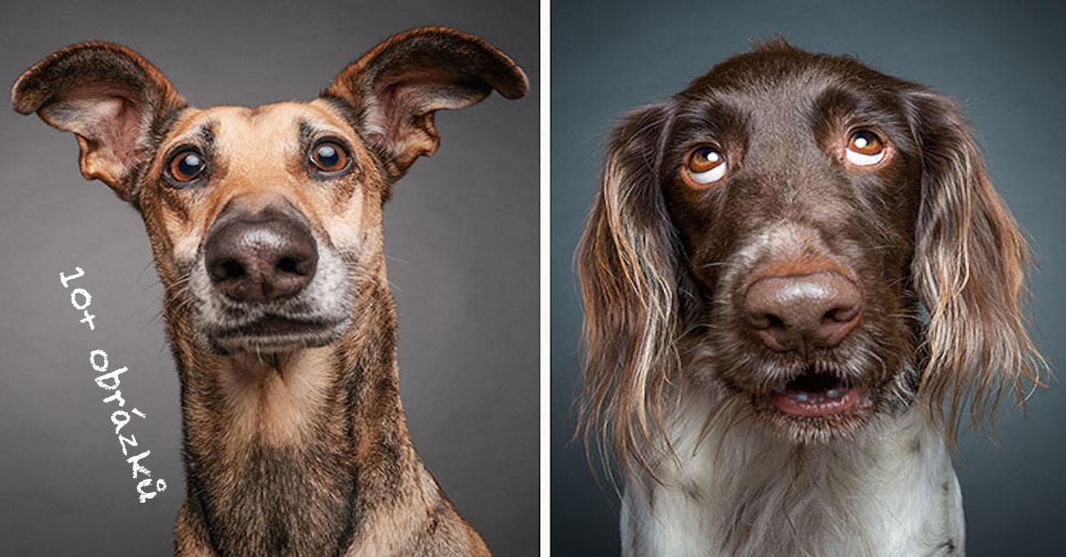 Psi zpochybňují inteligenci fotografa