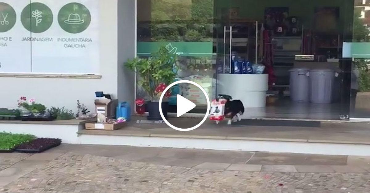 Tenhle pes chodí každý den nakupovat úplně sám, domů přinese pytel dobrot