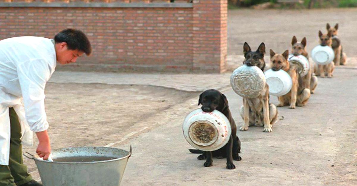 Policejní psi v Číně mají lepší etiketu než většina lidí