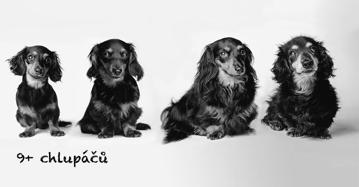 Dojemné psí obrázky od štěňat po stáří