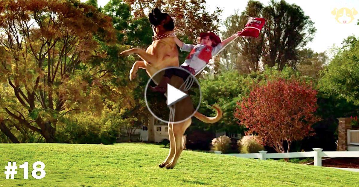 Nejlepší reklamy se psy (21)