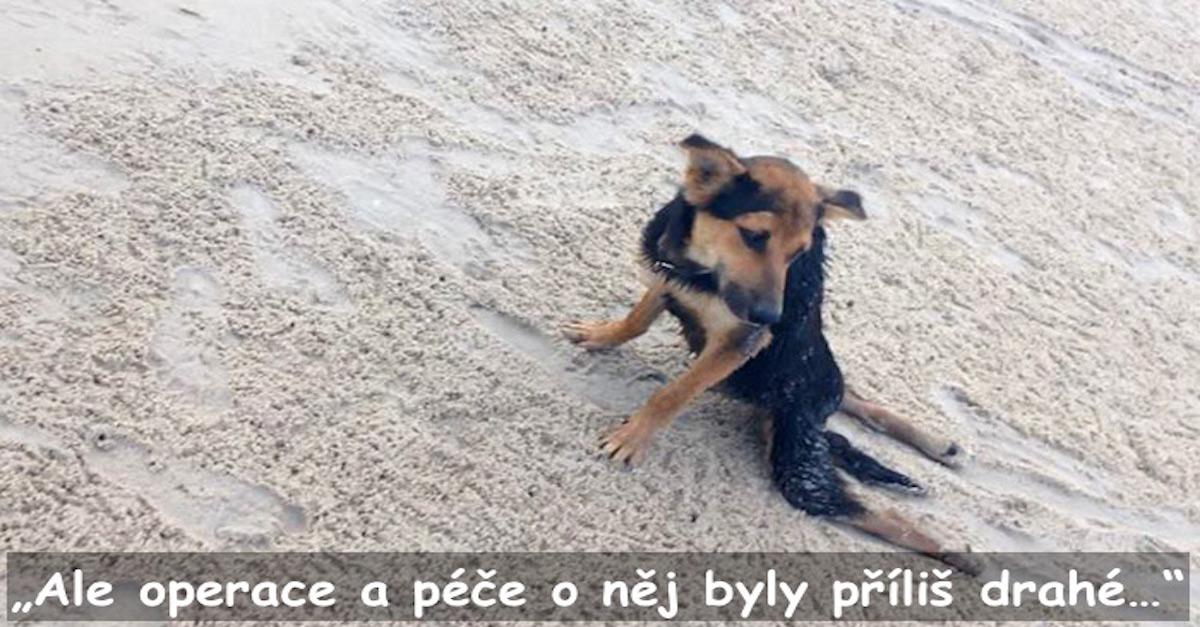 Neuvěřitelný příběh Lea, kterého našli na pláži v Thajsku