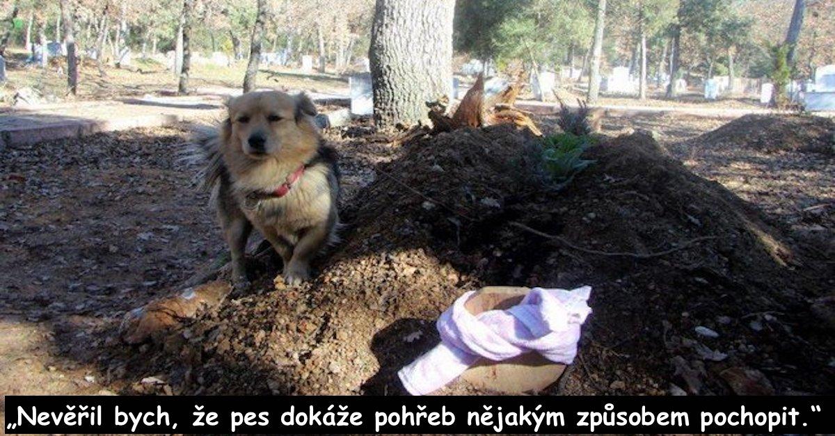 Truchlící pes chodí na hrob svého majitele každý den