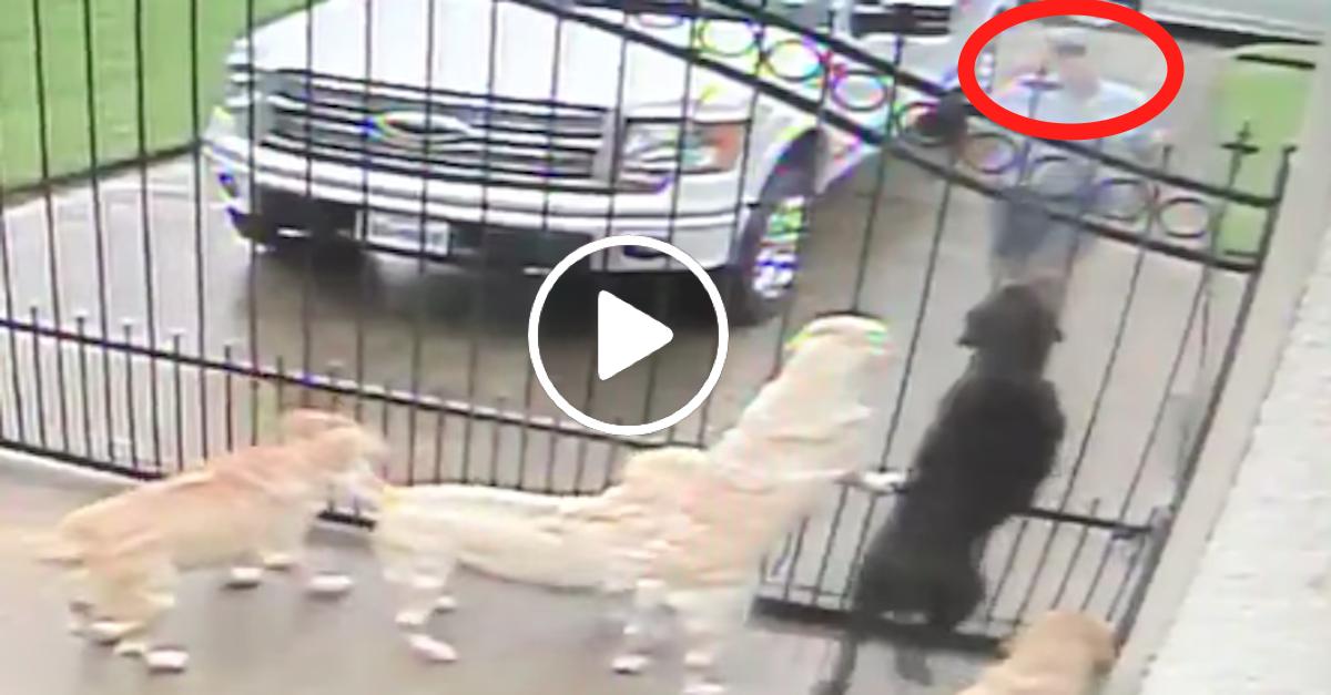 Skrytá kamera: Co dělal nový pošťák psům, když nikdo nebyl doma?