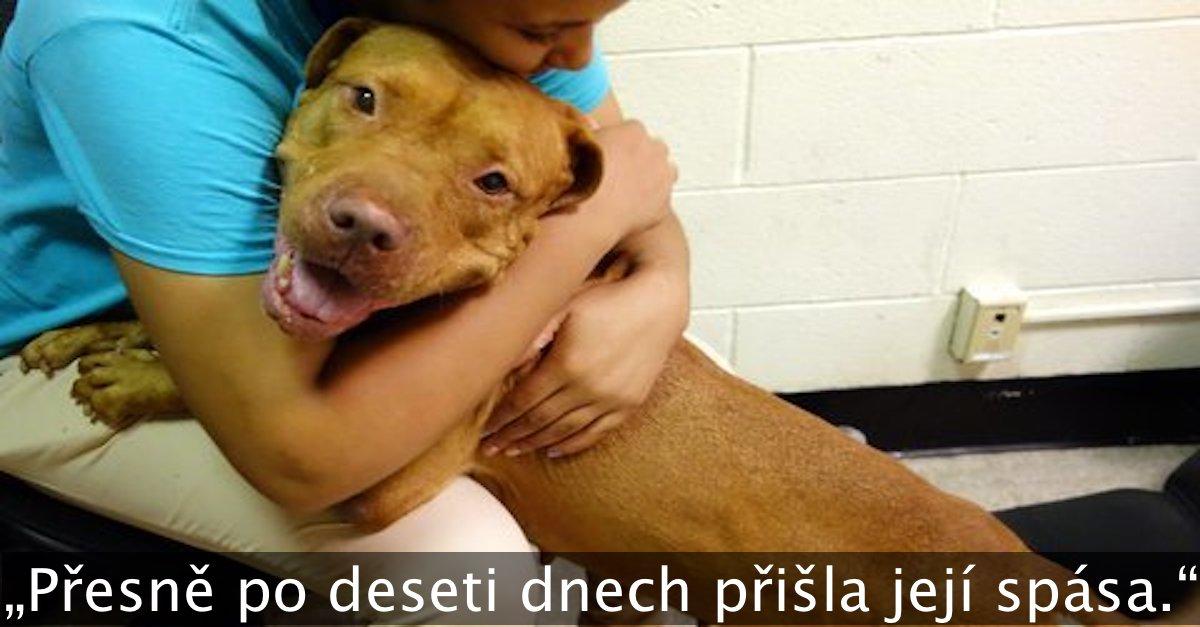 """Pes skončil útulku, protože byl """"příliš velký"""", naštěstí vše dobře dopadlo"""