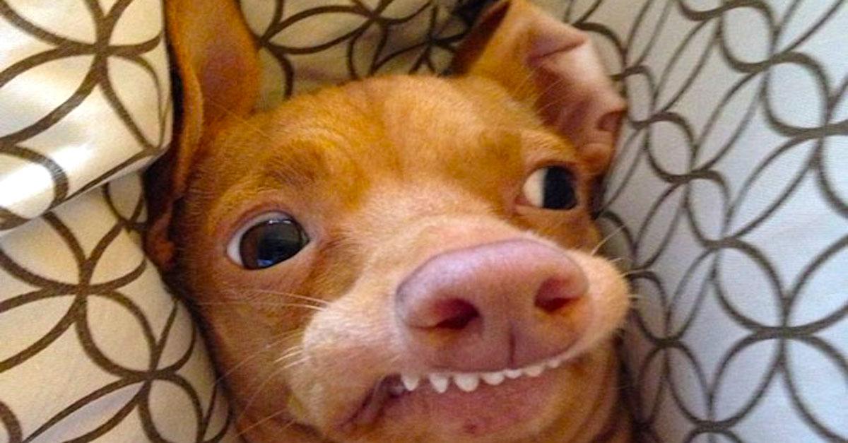 Adoptovaný chlupáč se stal internetovou senzací, sledují ho 2 miliony fanoušků