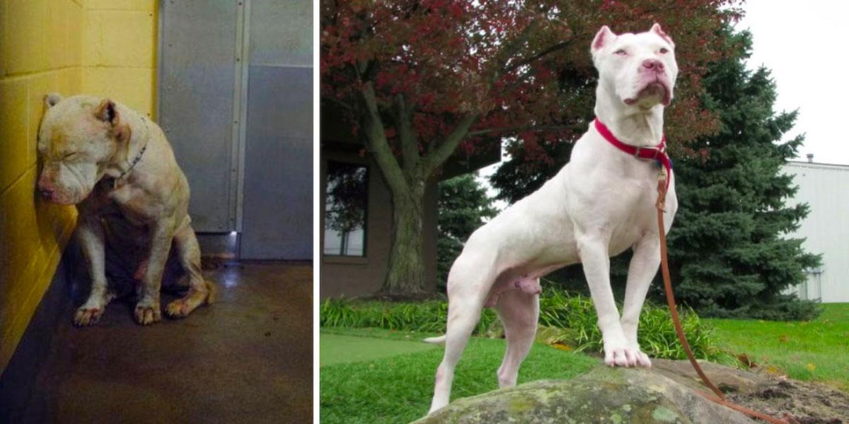 15+ obrázků Před a Poté: ADOPCE