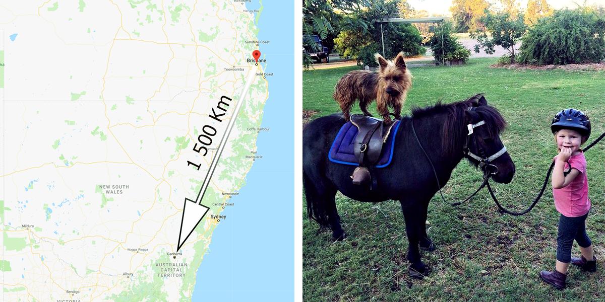 Tenhle pes se rozhodl procestovat Austrálii, všechno zvládl sám