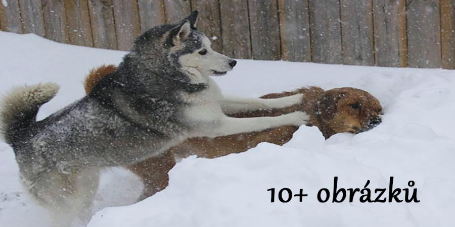 I psi dokáží dělat naschvály, nevěříte? (10+ obrázků)