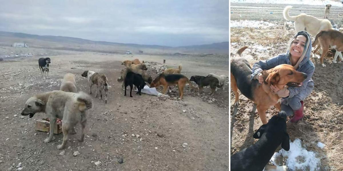 Nešťastný pes žil na skládce odpadků, zoufale prosil lidi o záchranu