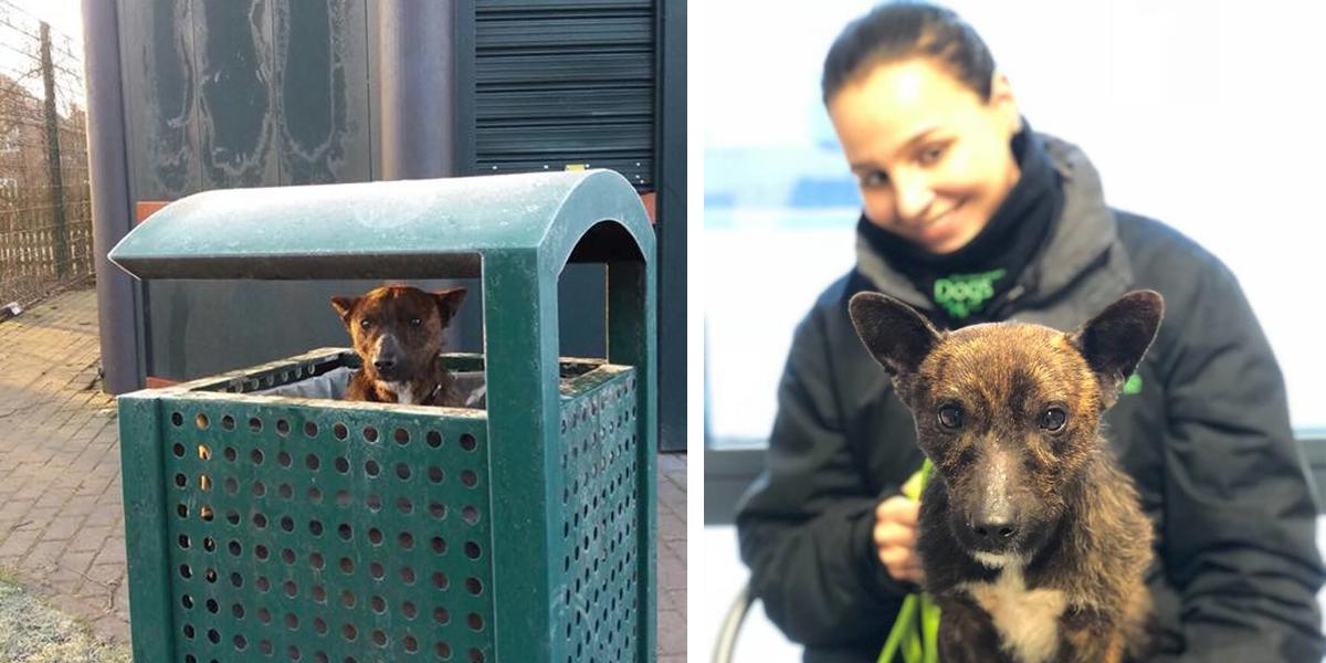Záchranáři našli psa uvězněného v koši na odpadky, na kterého se pak usmálo štěstí