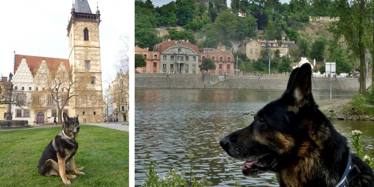 Významný český král a bezvýznamný český pes?