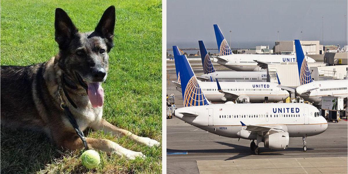United Airlines omylem poslali cestujícího (psa) na jiný kontinent, ten se může vrátit nejdříve za 2 týdny
