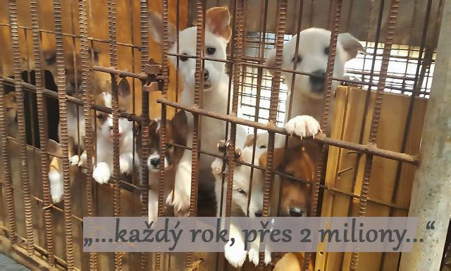 Tenhle pes z korejské farmy na maso dostal druhou šanci ♡