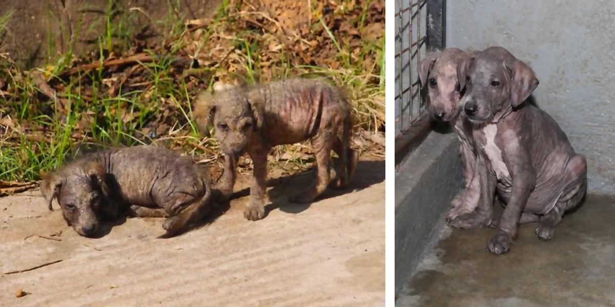 Dvě vyděšená 3 týdenní štěňata se spolu ocitla na ulici, záchraně se vzájemně bránila