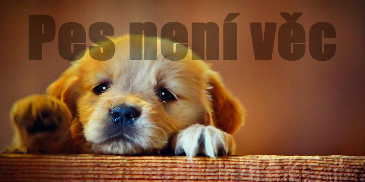 Pes není věc