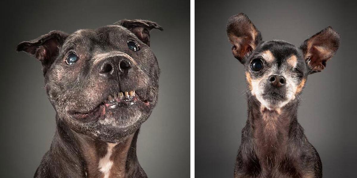 Staří a oškliví: Dojemné a upřímné obrázky opravdu starých psů