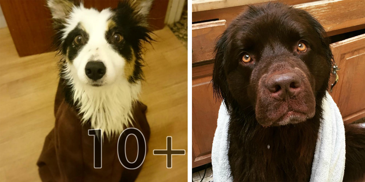 15+ psů, kteří mají koupání opravdu (ne)radi