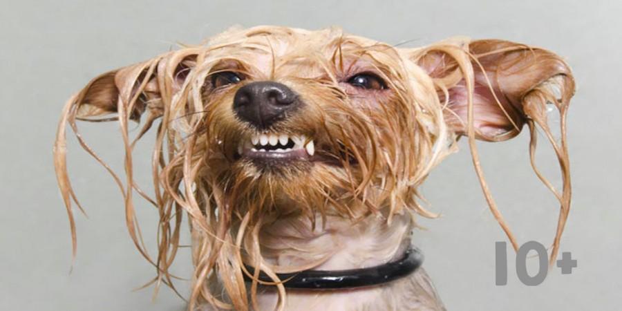 Mokrý Pes: Jedinečné obrázky od profesionální fotografky