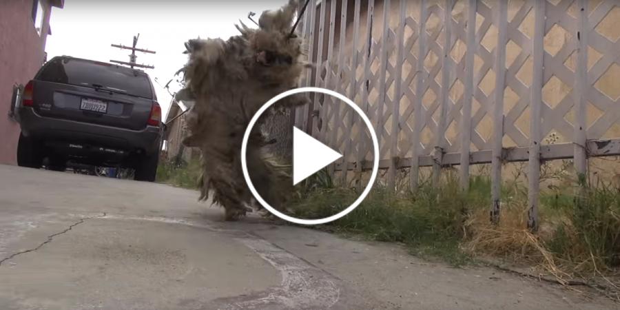 Beny se po ulici toulal přes 6 let, nyní se konečně dočkal své záchrany