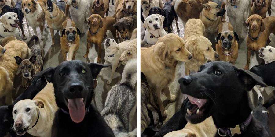 Tyhle geniální psí selfie vás zaručeně pobaví