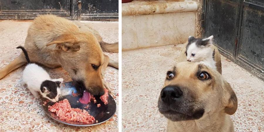 Kotě - sirotek potkalo tuhle fenku, která nedávno ztratila svá štěňata. Tady bychom si měli brát příklad...