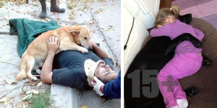 15+ projevů bezpodmínečné psí lásky, které Vás chytnou za srdce