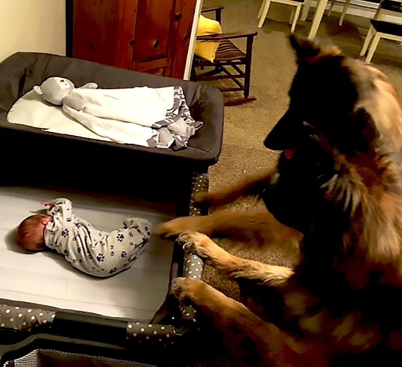 Novorozenec v posteli, psi, hlídání