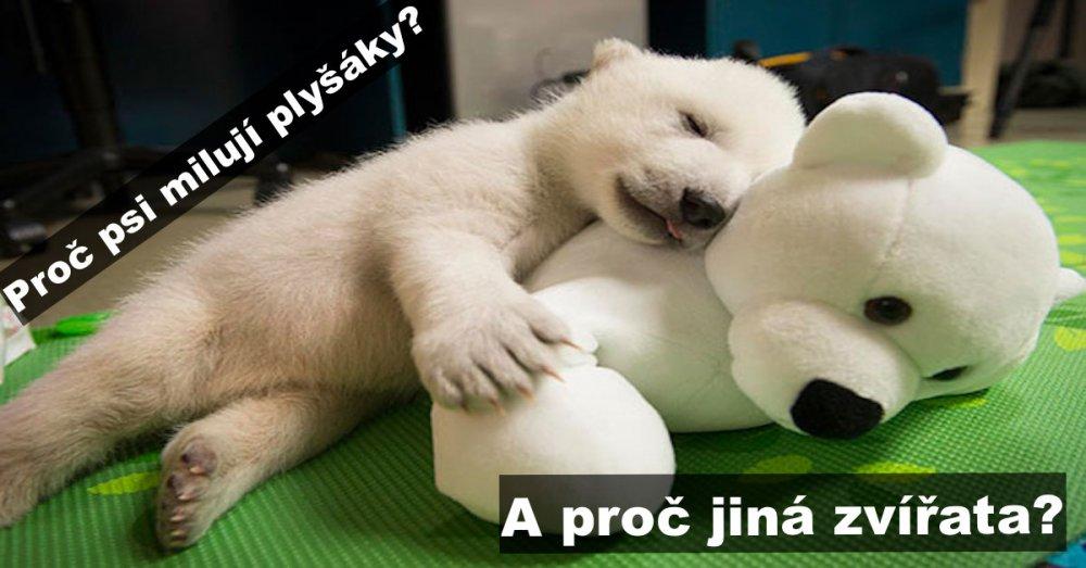 spanek_u_psu_roztomili_psi_pes_obrazky_fotografie_plysak_plysaci_plysove_hracky_spanek
