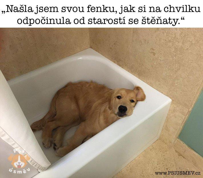 nejveselejsi_pes_psi_usmev_obrazky_se_psy_nejlepsi_vesele_radostne1