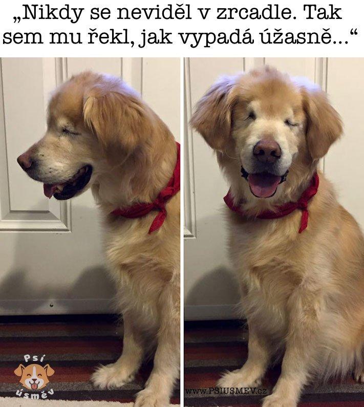 nejveselejsi_pes_psi_usmev_obrazky_se_psy_nejlepsi_vesele_radostne2