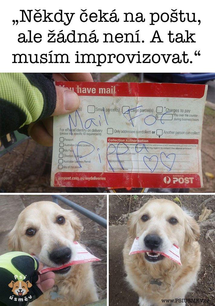 nejveselejsi_pes_psi_usmev_obrazky_se_psy_nejlepsi_vesele_radostne3