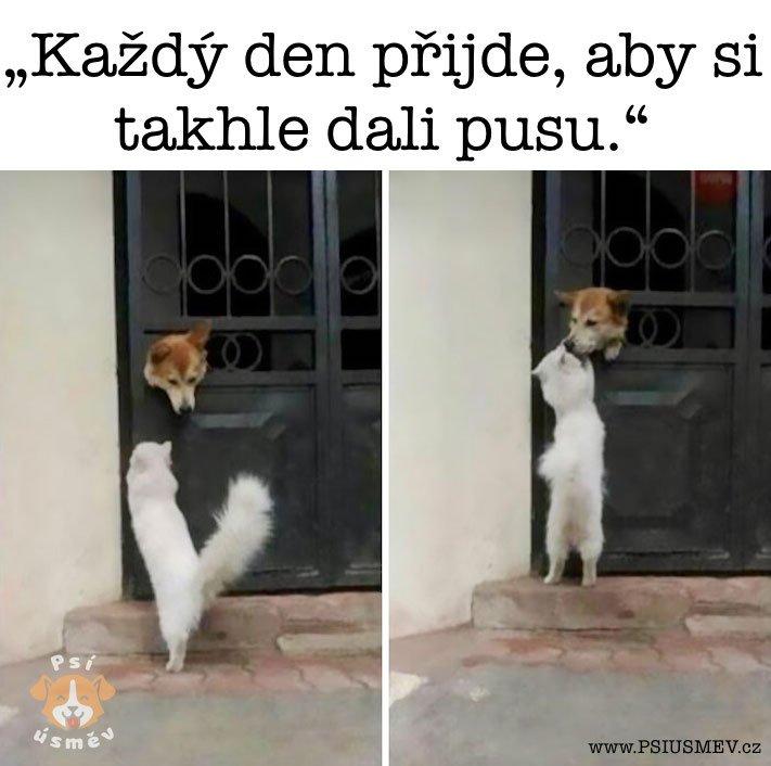 nejveselejsi_pes_psi_usmev_obrazky_se_psy_nejlepsi_vesele_radostne5