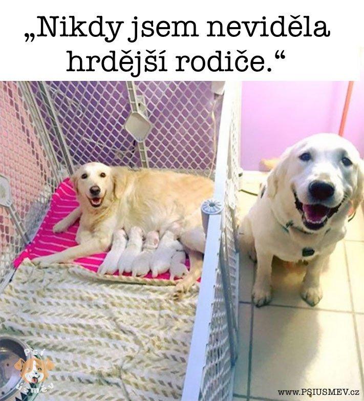 nejveselejsi_pes_psi_usmev_obrazky_se_psy_nejlepsi_vesele_radostne6