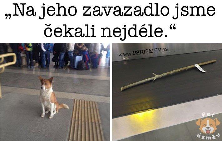 nejveselejsi_pes_psi_usmev_obrazky_se_psy_nejlepsi_vesele_radostne7