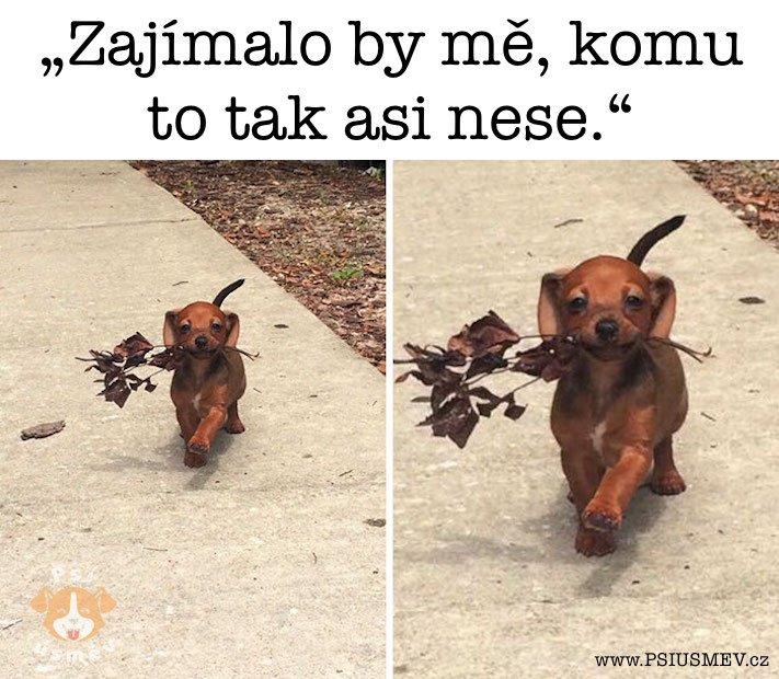 nejveselejsi_pes_psi_usmev_obrazky_se_psy_nejlepsi_vesele_radostne9