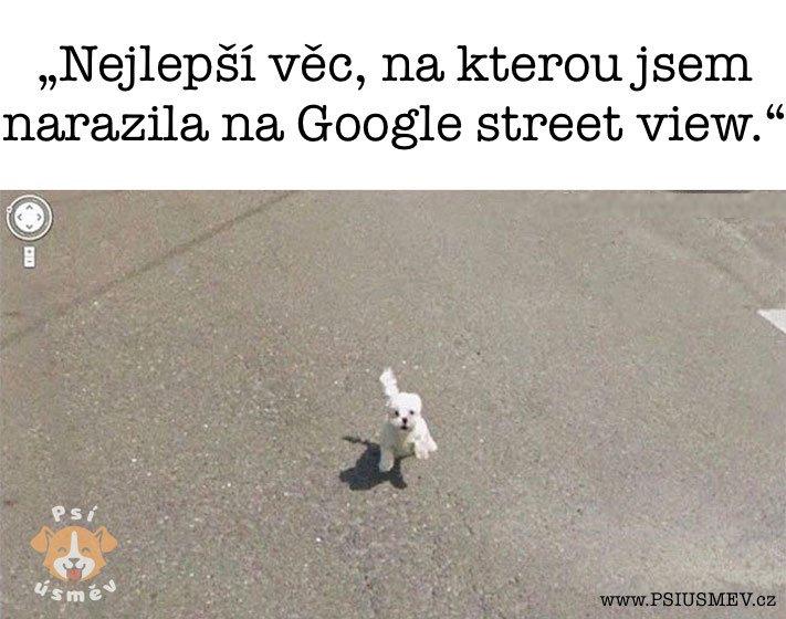 nejveselejsi_pes_psi_usmev_obrazky_se_psy_nejlepsi_vesele_radostne10