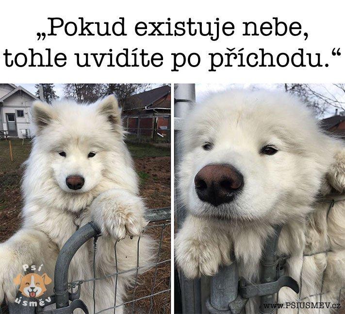 nejveselejsi_pes_psi_usmev_obrazky_se_psy_nejlepsi_vesele_radostne11