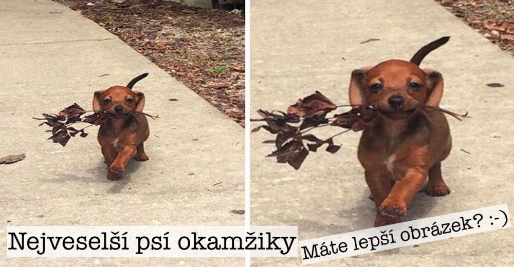 nejveselejsi_pes_psi_usmev_obrazky_se_psy_nejlepsi_vesele_radostne_nahled