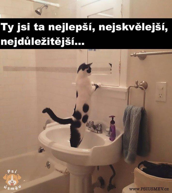 nejlepsi_okamziky_obrazky_chvile_psu_psi_psy_psa12