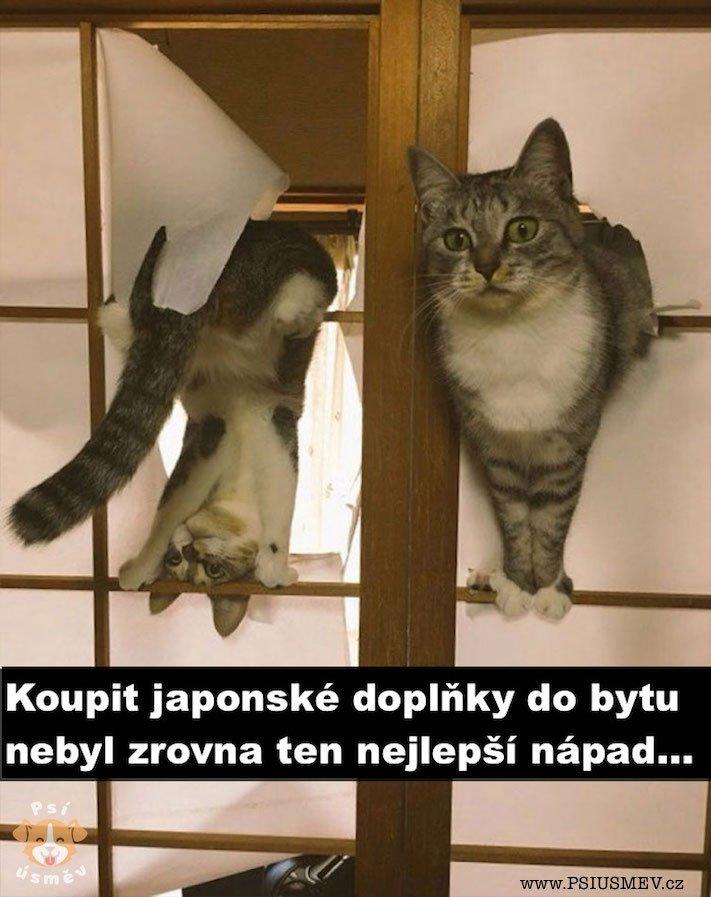 nejlepsi_okamziky_obrazky_chvile_psu_psi_psy_psa14