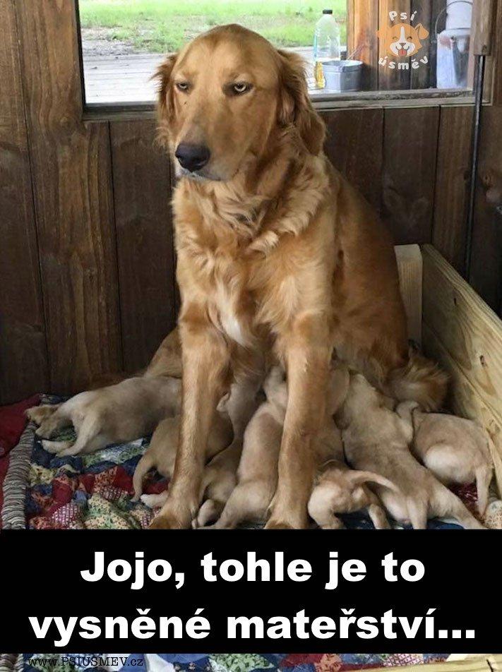 materstvi_fena_zlaty_retrivr