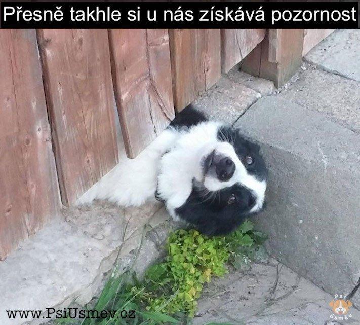 nejlepsi_nejzabavnejsi_nejvtipnejsi_obrazky_se_psy_psem_psi_pes_stene_stenetem_roztomile_obrazky11