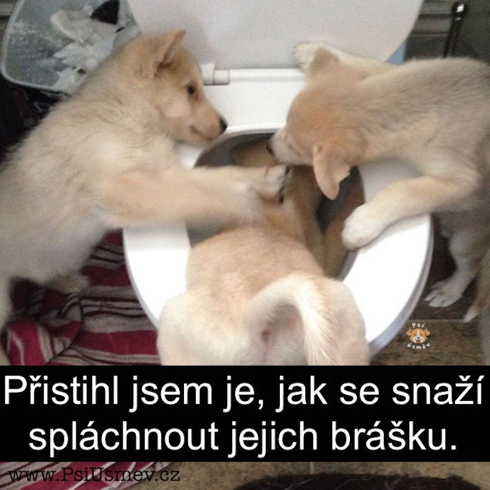 nejlepsi_nejzabavnejsi_nejvtipnejsi_obrazky_se_psy_psem_psi_pes_stene_stenetem_roztomile_obrazky15