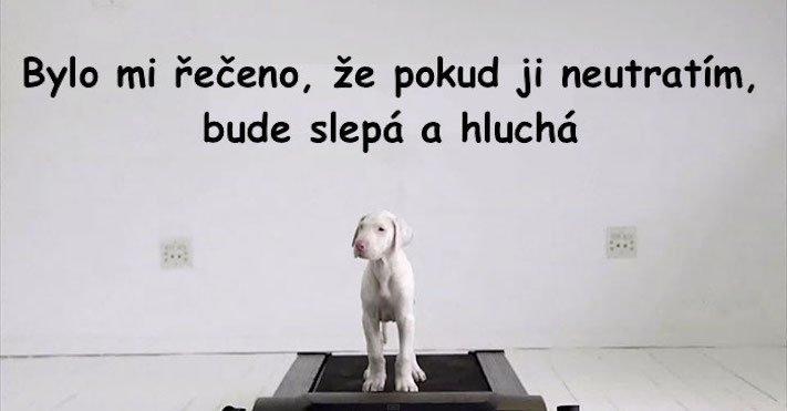 bily_psi_problemy_u_bilych_plemen_psu_boxeri_umrti_stenat_po_narozeni1
